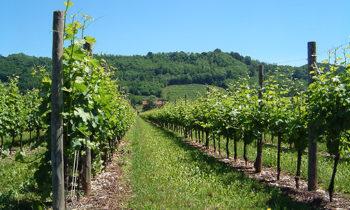 Sposi e vino in Friuli: un matrimonio perfetto